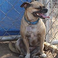 Adopt A Pet :: Cinnamon - Winchester, CA