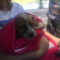 Adopt A Pet :: Grover - Tulsa, OK