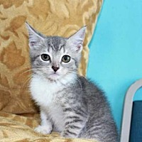 Adopt A Pet :: BUTTERCUP - Andover, CT
