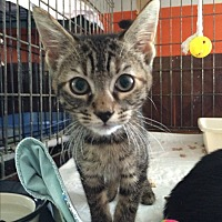 Adopt A Pet :: Shirley - Middletown, NY
