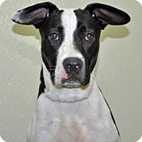 Adopt A Pet :: Niya - Port Washington, NY