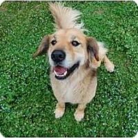 Adopt A Pet :: Mosche - Danbury, CT