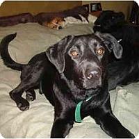 Adopt A Pet :: Jett - North Jackson, OH