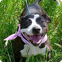 Adopt A Pet :: All I want is LOVE take me hom - Sacramento, CA