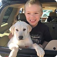 Adopt A Pet :: Cooper - CHAMPAIGN, IL