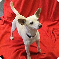 Adopt A Pet :: Holly - Delaware, OH