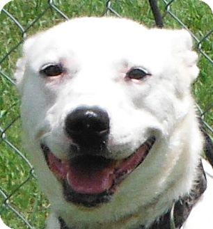 Border Collie/Shepherd (Unknown Type) Mix Dog for adoption in Cedartown, Georgia - 32065325
