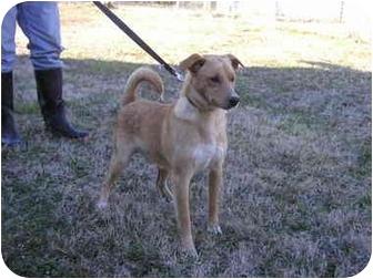 Labrador Retriever/Spitz (Unknown Type, Medium) Mix Dog for adoption in Graysville, Tennessee - Tracker