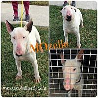 Adopt A Pet :: MOzelle - Houston, TX
