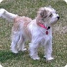 Adopt A Pet :: Rika