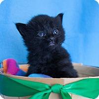 Adopt A Pet :: Aster - Muskegon, MI