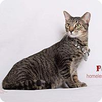 Adopt A Pet :: Pepe - Sherman Oaks, CA