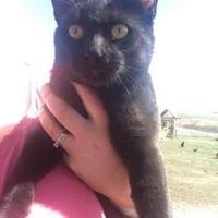 Adopt A Pet :: Bagheera - Kyle, SD