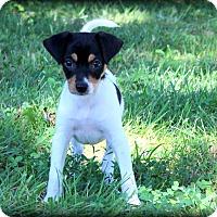 Adopt A Pet :: Pixie~adopted! - Glastonbury, CT