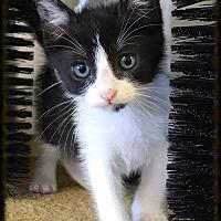 Adopt A Pet :: Starlord - Los Alamitos, CA