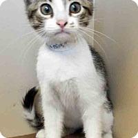 Adopt A Pet :: Jared - Oswego, IL