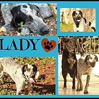 Adopt A Pet :: Lady - Cambridge, ON