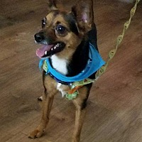 Adopt A Pet :: Whisky! FOSTER NEEDED 8/20! - New York, NY
