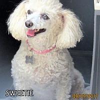 Adopt A Pet :: Sweetie (GrandPaws) - Lindsay, CA