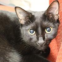 Adopt A Pet :: Murphy - Sarasota, FL