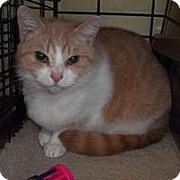 Adopt A Pet :: Fiona - Acme, PA