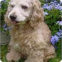 Adopt A Pet :: Lars - Sugarland, TX