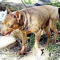 Adopt A Pet :: Marshall - Florissant, MO