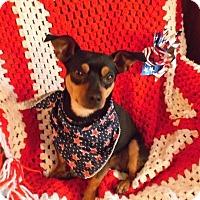 Adopt A Pet :: Hogan - Nashville, TN
