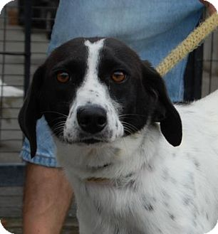 Collie Mix Dog for adoption in Brooklyn, New York - Jewel