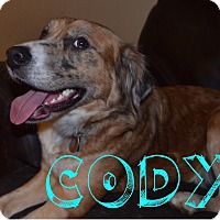 Adopt A Pet :: Cody - Hamburg, PA