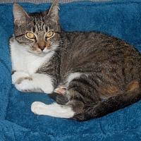 Adopt A Pet :: Miss Marple - Albemarle, NC
