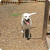 Adopt A Pet :: ISABEL - Wilmington, NC
