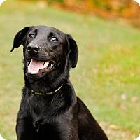 Adopt A Pet :: Flynn - White Plains, NY