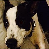 Adopt A Pet :: Jai - Tempe, AZ
