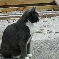 Adopt A Pet :: Melody - Naples, FL
