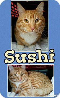 Domestic Mediumhair Cat for adoption in Edwards AFB, California - Sushi