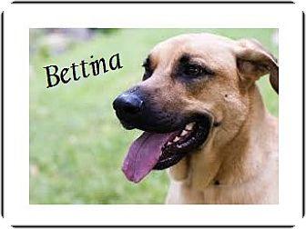 Labrador Retriever/German Shepherd Dog Mix Dog for adoption in El Cajon, California - Bettina