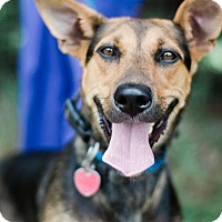 Adopt A Pet :: Cleo $125 - Seneca, SC
