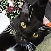 Adopt A Pet :: Fiona - Medina, OH