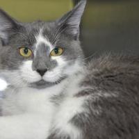 Adopt A Pet :: Romaine - West Olive, MI