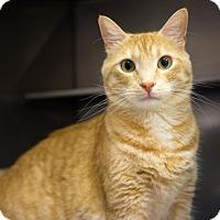 Adopt A Pet :: Roger - Birdsboro, PA