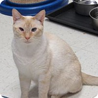 Adopt A Pet :: Camden - Cary, NC