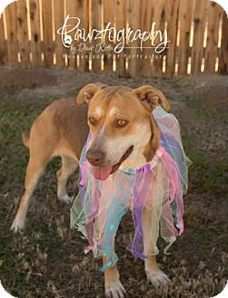 Husky/Shepherd (Unknown Type) Mix Dog for adoption in Gilbert, Arizona - Ginger
