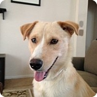 Adopt A Pet :: Madilyn - Madison, WI