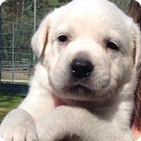 Adopt A Pet :: Sarah - Marlton, NJ