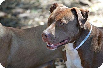 Terrier (Unknown Type, Medium) Mix Dog for adoption in Brookhaven, New York - J