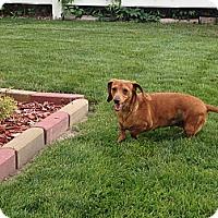 Adopt A Pet :: Hannah - Alliance, NE
