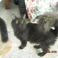 Adopt A Pet :: Beauty - Riverside, RI
