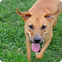 Adopt A Pet :: Meg - Bedminster, NJ