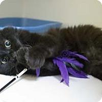 Adopt A Pet :: Rocky - Merrifield, VA